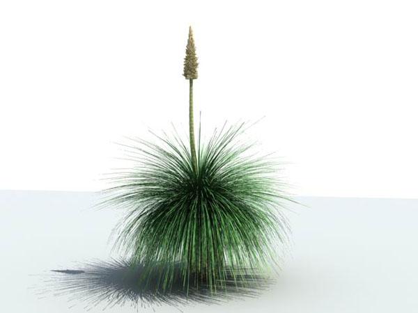 CG Plants / Mexican Grass Tree